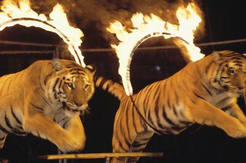 circus quit job