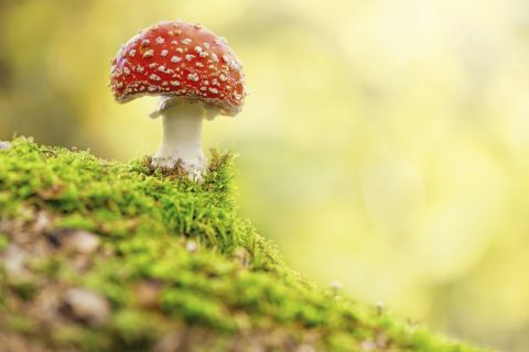 office mushroom farm